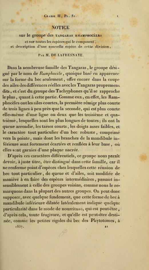 Notice sur le groupe des Tangaras Rhamphoceles et sur toutes les especes qui le composent, et description d'une nouvelle espece de cette division