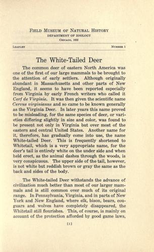 The white-tailed deer.
